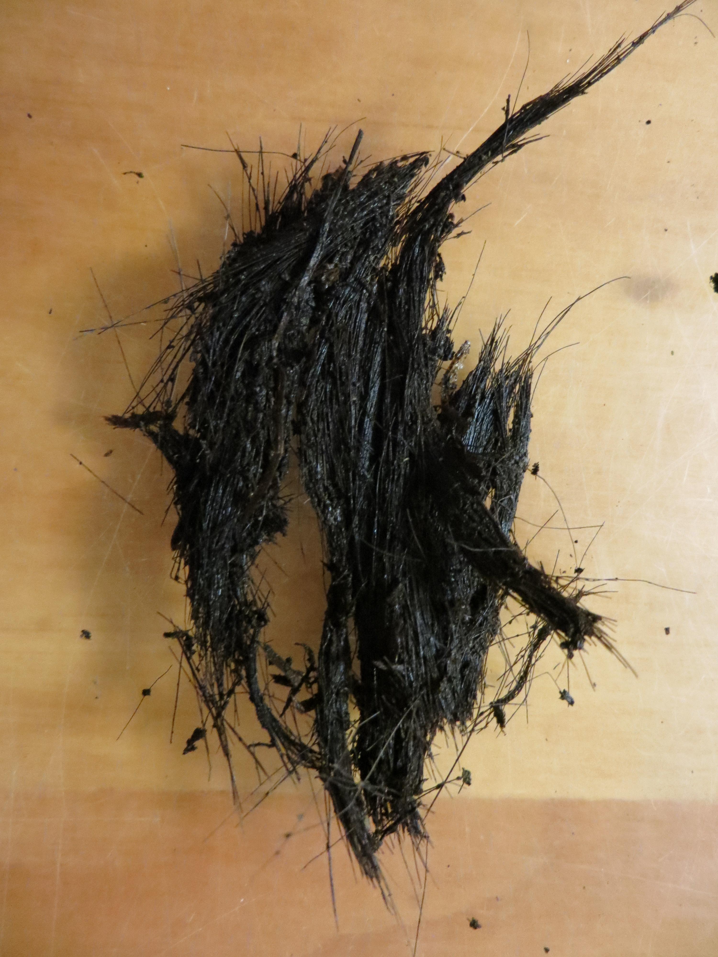 Fleas In Human Hair Remedy 65